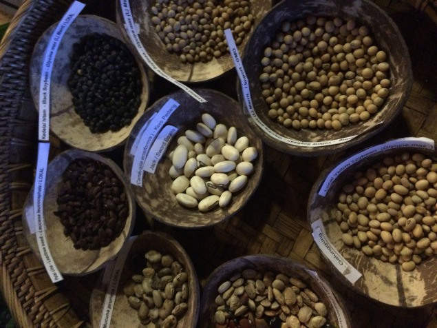 Bermacam jenis kacang kedelai yang saat ini beredar di pasaran dan dapat dijadikan bahan baku utama pembuatan tempe